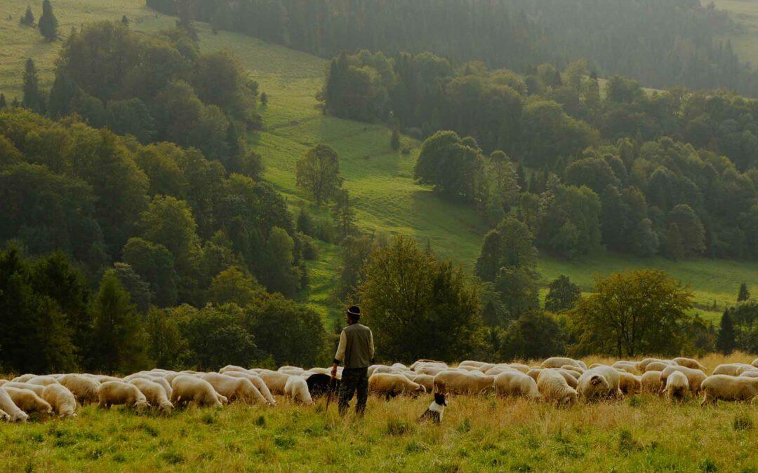 A Shepherd's Prayer for His Flock